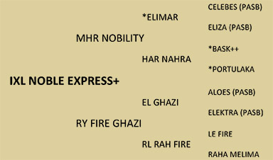 IXL NOBLE EXPRESS+ - Shea Stables 1997 Arabian Bay Stallion